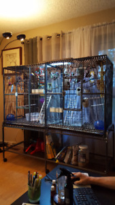 Large Bird Cage with Finches