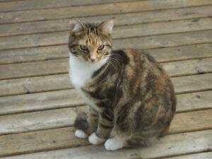 LOST CAT IN LUNENBURG