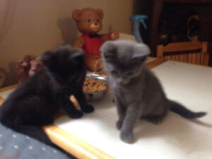 2 Male kittens FREE to good homes