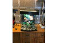 35l fish tank full set up with 2 x light filter lid gravel nice ornament all work and all in pic