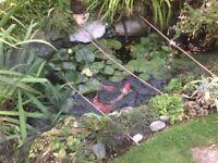 Electric pond pump, box filter etc