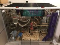 Four make fancy rats plus cage, free to a loving home