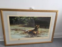 Indian Siesta by David Shepherd Signed Limited Edition Print 13/1300 1982