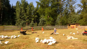 Pasture raised broilers and Turkeys