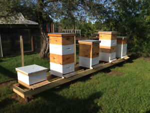 Honey bee colonies and Nucs available
