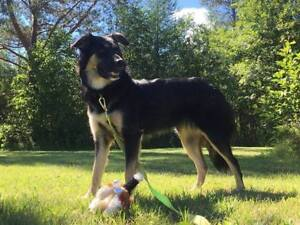 NORTHERN LIGHTS DOGS RESCUE -- FOSTER HOMES NEEDED