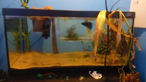 Unwanted fish looking for new home