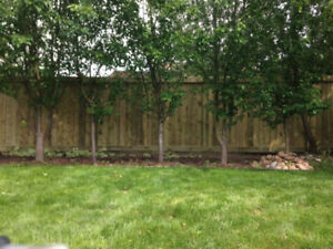 Professional Fences – Free Quotes - Screws Only - $25/ft