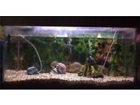 Fish tank and 6 Puranas for sale