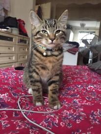 Kitten, 5 months old, looking for a new home