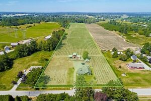 JUST LISTED - 20.24 Acres Blueberry Farm