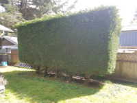 GARDENING AND LANDSCAPING GREAT VALUE(Vancouver, Burnaby, Richmo