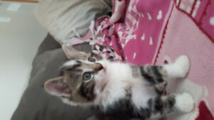 8 wk old kittens to go to a good home