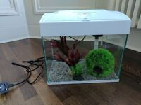 Starter Fish Tank (Tetra White 30 litre) with LED light, filter and 3 plant accessories