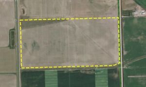 72.85 Acres of Pivot Irrigated Land close to Lethbridge