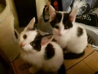 Moggies , no lies, no gimmicks just amazing cats and kittens needing homes