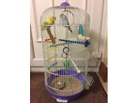 2 male budgies and cage