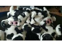 Novelty cow slippers brand new