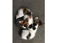 Three adorable kitty's ready for new homes!