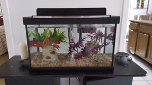 2 aquariums