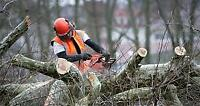 *** FREE *** Tree Trunk Removal (NOT STUMP)