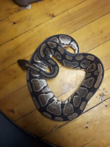 reptile/ small animal and equipment SALE