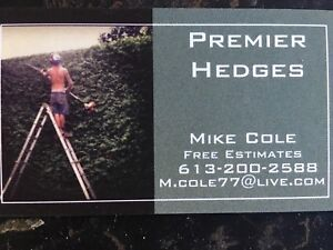 Hedge trimming professional