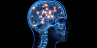 TUTOR FOR K-12; CHEAP PRICES; HONORS NEUROSCIENCE AT U OF A