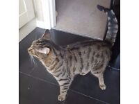 Gorgeous 2 year old Cat needs new home
