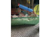Two female gerbils for sale with cage