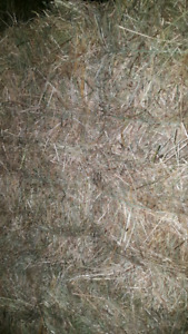 2017 Hay First cut small square bales