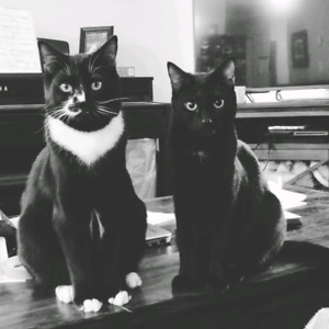 2 young cats for good home