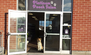 Now Hiring: Part time Pet Stylist in Downtown Kitchener