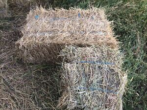 Mini bales, not the compressed ones.