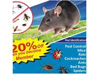 Pest Control Get rid of Mice Rats bedbugs ants Wasps cockroaches Flies Extermination same day