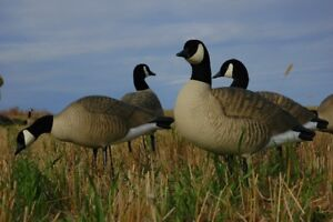 NEW Decoys Duck Goose Avery Greenhead Gear Blinds RNT Calls