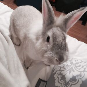 Bunny in need of forever home