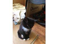 Beautiful friendly kittens 1 boy 2 girls. 7weels old.