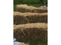 200 x Straw bales for sale now, Boncath, Pembrokeshire
