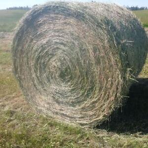 Premium horse Round Timothy/brome Grass hay 10%alfafa