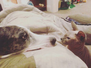 Retired moms and dads  Sphynx, Himmy, Siamese, Persian