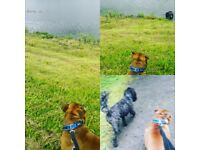 Dog walking, day care & boarding