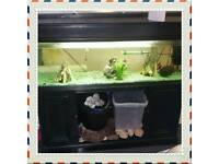 4ft tank and stand