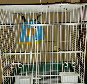Bird cage with some accessories