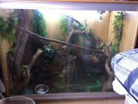 Large vivarium and decor