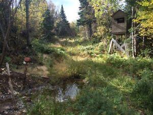 Terrain de chasse à l'Orignal près de Matane
