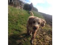 Biggles Walkies - 5* Dog Walking and Pet Sitting