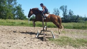 Indoor and Outdoor board for your horse or pony - indoor arena +