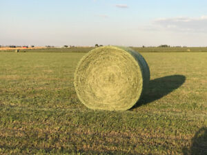 Premium Hay for Sale - Net Wrapped Round Bales