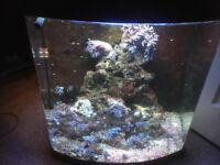 90 litre marine fish tank full set up